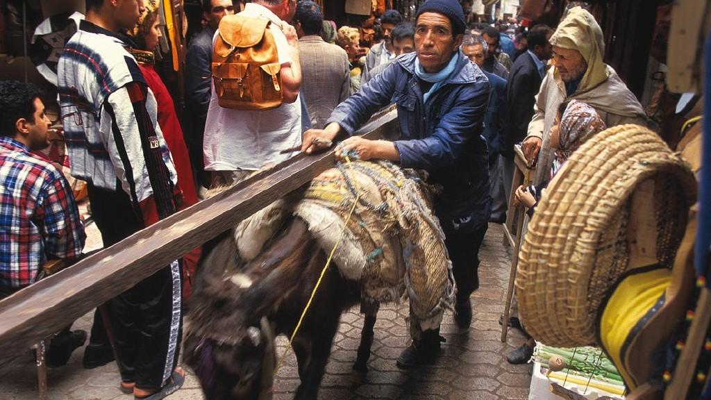 Esel-Transport.jpg
